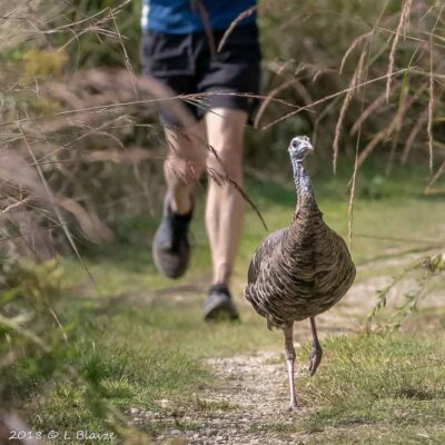 turkey running, runner, path